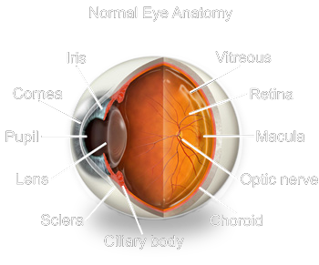 davis optical family eye health center anatomy of the eye
